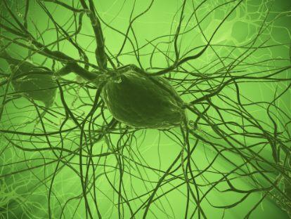 nerve bundle-Norman Marcus Pain Institute blog