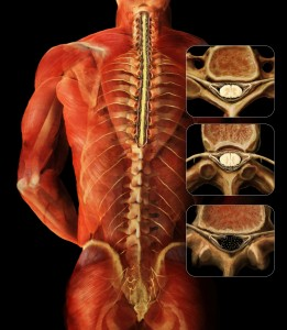 B_vertebrae_function_01
